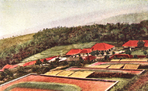 Drying Grounds and Factory in the Preanger Regency